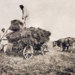 1890's_mowing-season_Volyn